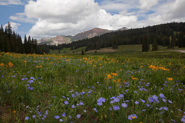 Photograph - Kebler Pass Summer by Susan Rovira