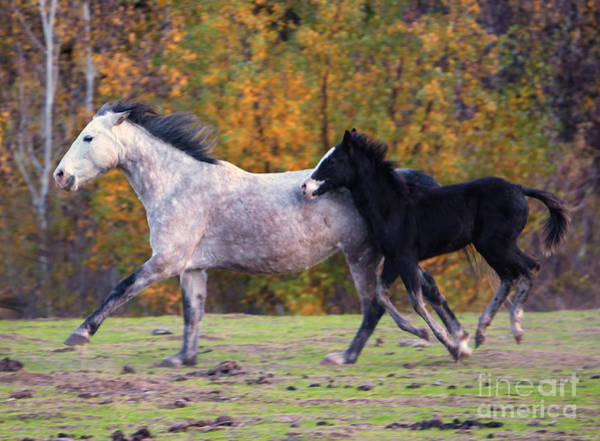 Mare Photograph - Keeping Up by Mike Dawson