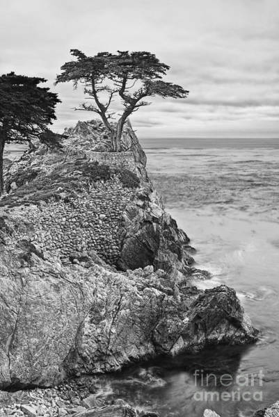 Monterey Cypress Photograph - Keeping Watch - Famous Lone Cypress Tree At Pebble Beach In Monterey California In Black And White by Jamie Pham