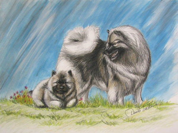 Chien Drawing - Keeshond With Pup by Daniele Trottier
