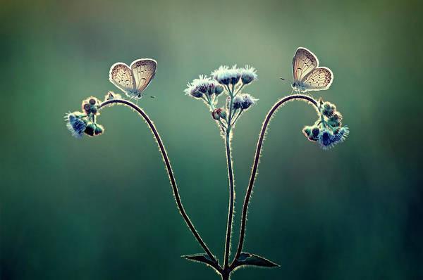 Butterfly Photograph - Keindahan Pagi by Adi Isna Maulana