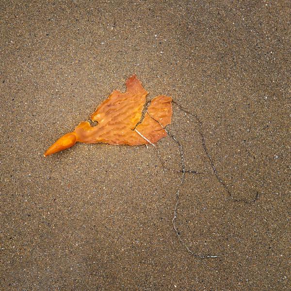 Kelp Photograph - Kelp by Joseph Smith