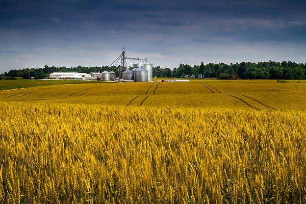 Photograph - Kentucky - Wheat Field And Farm by Ron Pate
