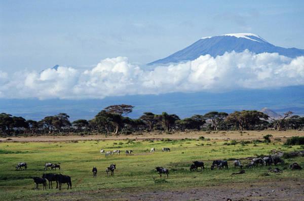 Mount Kenya Photograph - Kenya Wildlife Grazing Near Mount by Animal Images