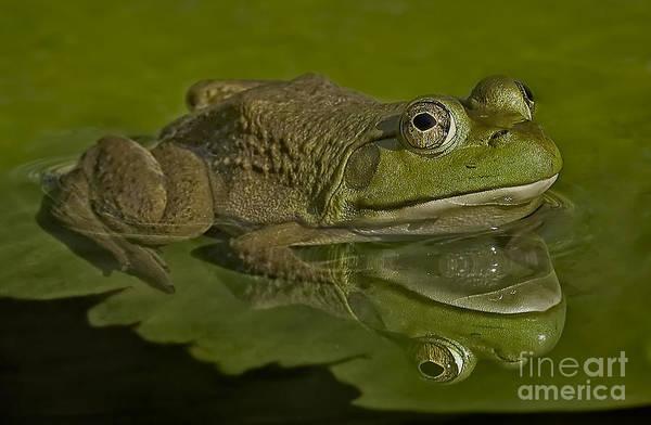 Bull Frog Photograph - Kermit by Susan Candelario