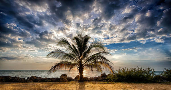 Key West Florida Lone Palm Tree  Art Print