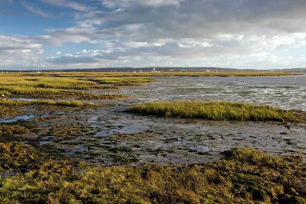 Coastal Marshes Photograph - Keyhaven Marshes Nature Reserve by Bob Gibbons/science Photo Library