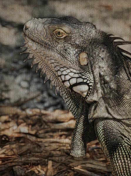 Iguana Photograph - Keys Iguana by Deborah Benoit