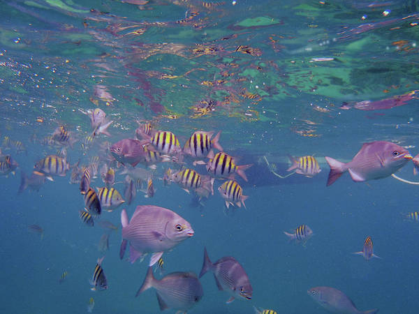 Wall Art - Photograph - Keys Reef by Carey Chen