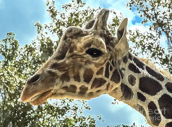 Photograph - Khama The Silver Springs Giraffe by Kathi Shotwell