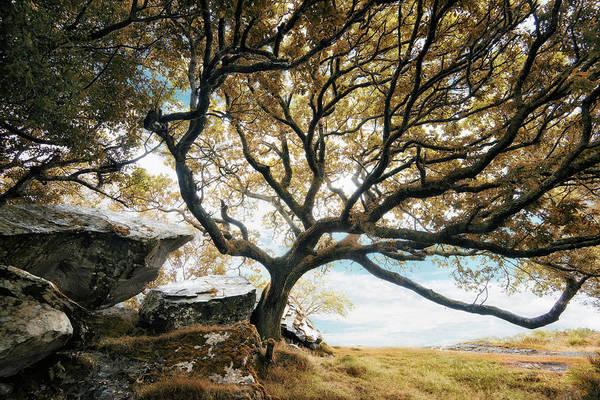 Killarney Photograph - Killarney National Park by Nicolas Kipourax Paquet