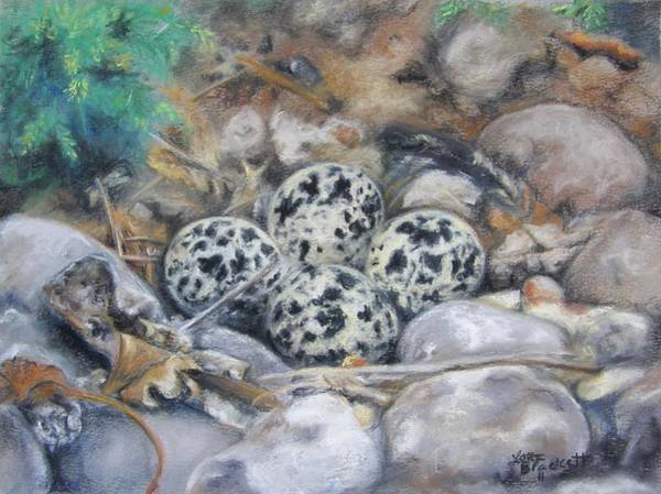 Drawing - Killdeer Nest by Lori Brackett