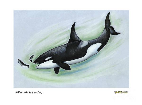 Killer Whale Feeding Art Print