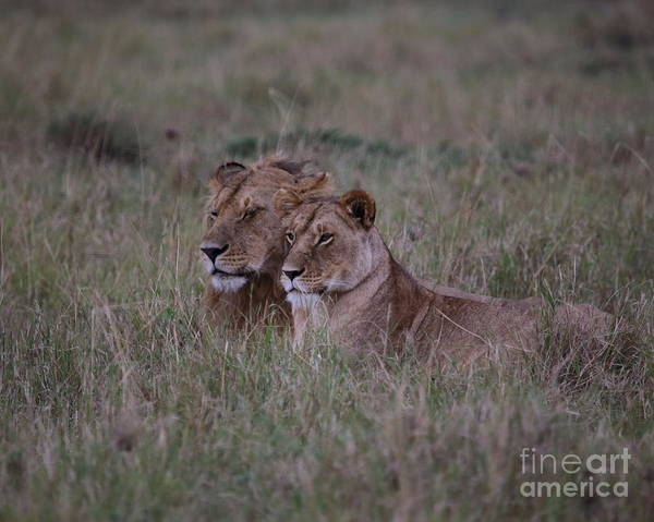 Wall Art - Photograph - King And Queen by Kevin Boyd