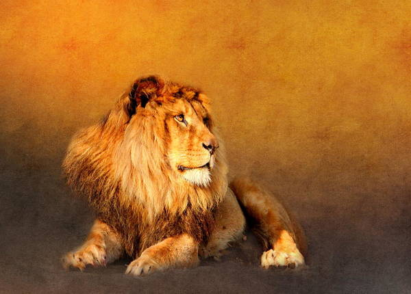 Wallpaper Mixed Media - King Leo by Heike Hultsch
