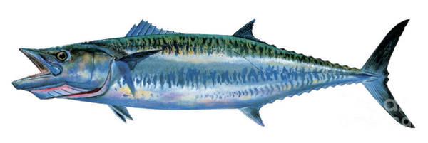 Mako Painting - King Mackerel by Carey Chen