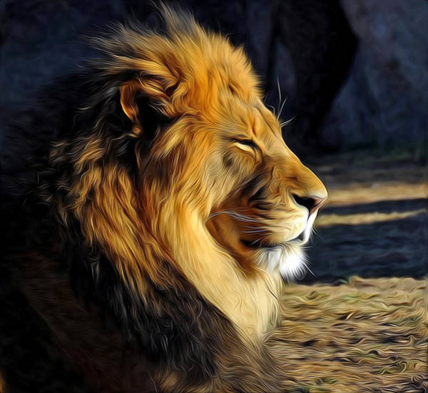Denver Zoo Photograph - King Of The Beasts by John Hoffman