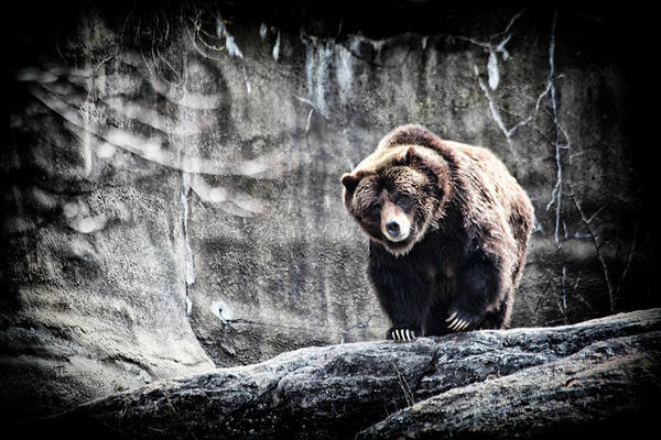 Grizzly Bears Photograph - King Of The Hill by Karol Livote