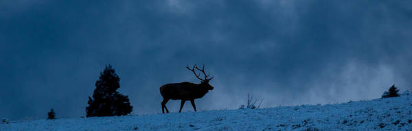 Photograph - King Of The Hill by Kevin  Dietrich