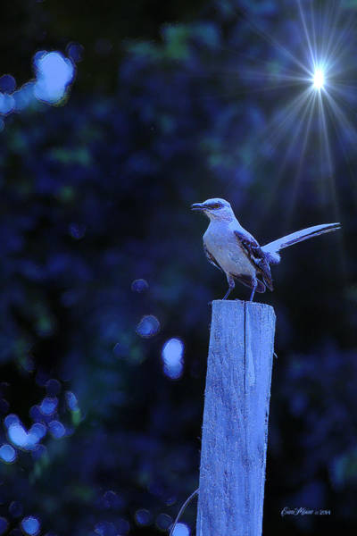 Photograph - King Of The Post by Ericamaxine Price