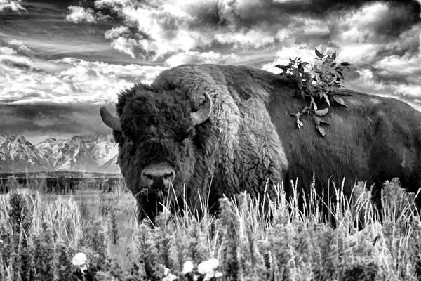Photograph - Monarch Of The Plains by Jim Garrison