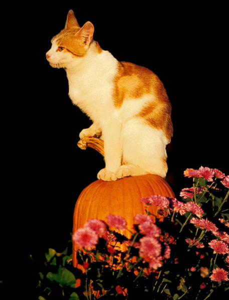 Photograph - King Of The Pumpkin by Peg Urban