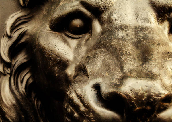 Lion Statue Photograph - King Of Union Square Park by Jon Woodhams