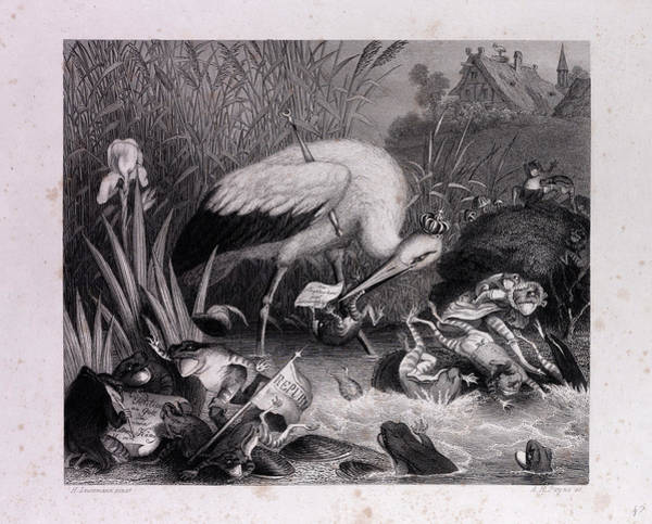 Reynard Wall Art - Drawing - King Stork And The Frogs by English School