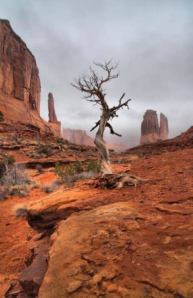 Photograph - King's Tree by David Andersen
