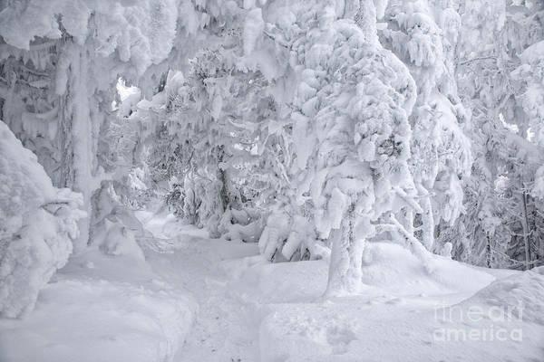 Photograph - Kinsman Ridge Trail - Franconia Notch State Park New Hampshire by Erin Paul Donovan
