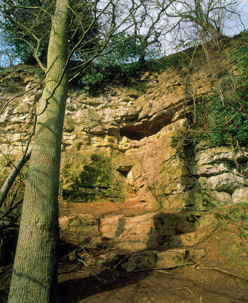 Wall Art - Photograph - Kirkdale Cave by Sinclair Stammers/science Photo Library