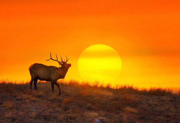 Colorado Wildlife Wall Art - Photograph - Kiss The Sun by Kadek Susanto
