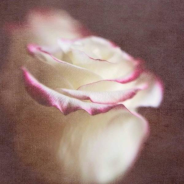 Roses Wall Art - Photograph - Kissed With Love #love #rose by Scott Pellegrin
