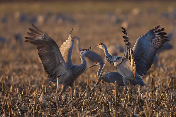 Photograph - Kissing Sandhills by Jack R Perry