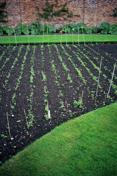 Vegetable Patch Wall Art - Photograph - Kitchen Garden by Duncan Smith/science Photo Library