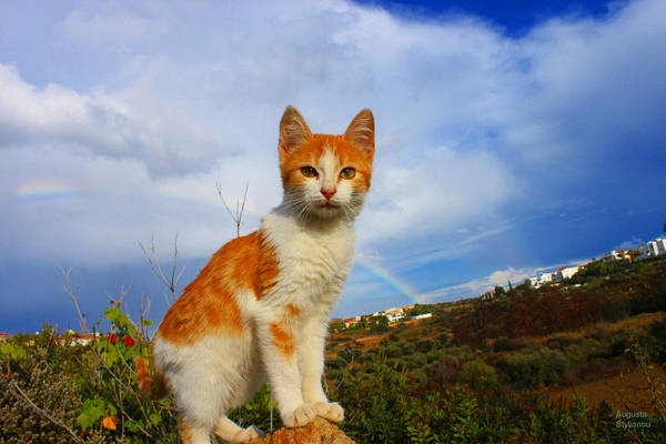 Photograph - Kitten And Rainbow by Augusta Stylianou