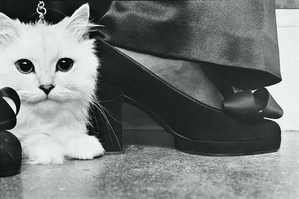 Cats Photograph - Kitten By Charles Jourdan Pumps by Kourken Pakchanian