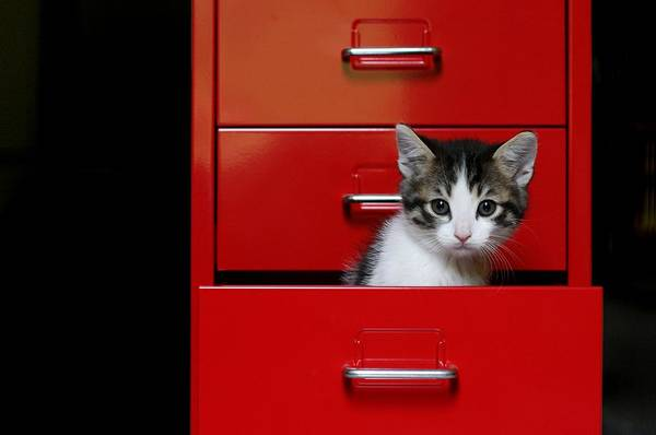 Drawers Photograph - Kitten In A Red Drawer by © Nico Piotto