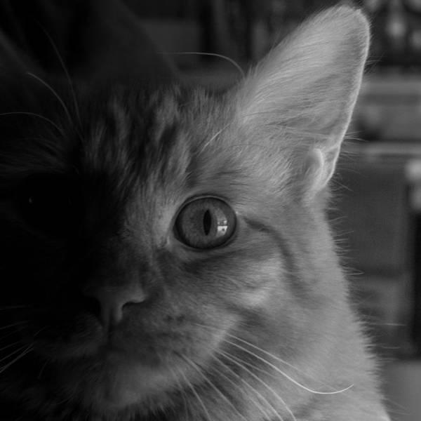 Photograph - Kitten In A Window by Guy Whiteley