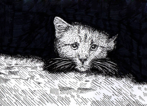 Wall Art - Drawing - Kitten by Karl Addison