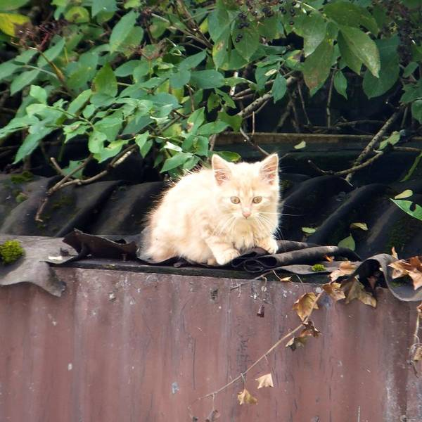 Photograph - Kitten On A Roof by Marc Philippe Joly