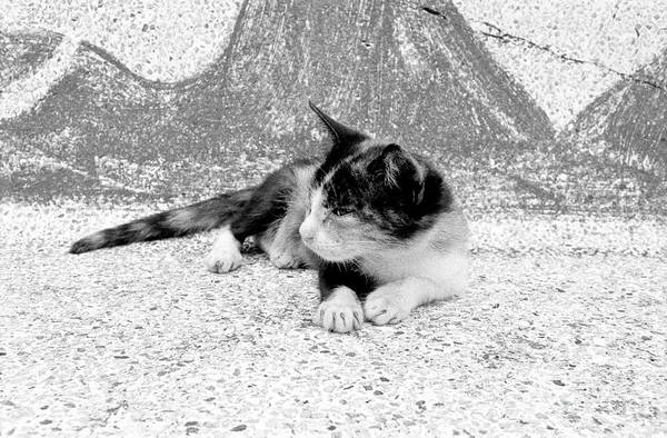 Wall Art - Photograph - Kitten On A Temple Bench by Dean Harte