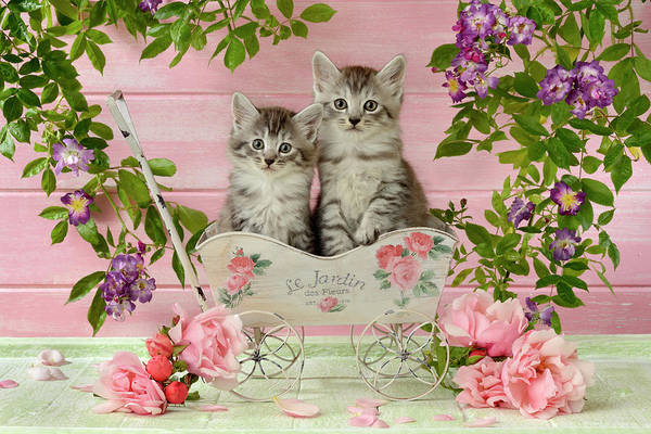 Wall Art - Painting - Kittens In Wagon by MGL Meiklejohn Graphics Licensing