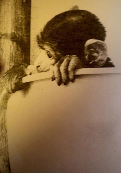Photograph - Kitterly Monkey by Colette V Hera  Guggenheim