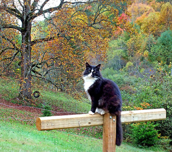 Photograph - Kitty Cat In The Fall by Duane McCullough