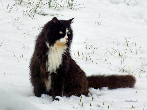 Photograph - Kitty Cat In The Snow by Duane McCullough