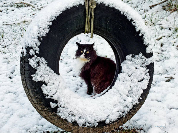 Photograph - Kitty Cat Through The Snowytire Swing by Duane McCullough