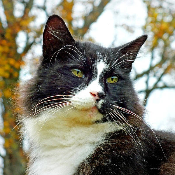 Photograph - Kitty Cat Upclose by Duane McCullough