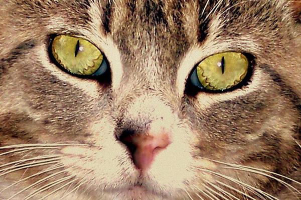 Photograph - Kitty Green Eyes by Suzy Piatt