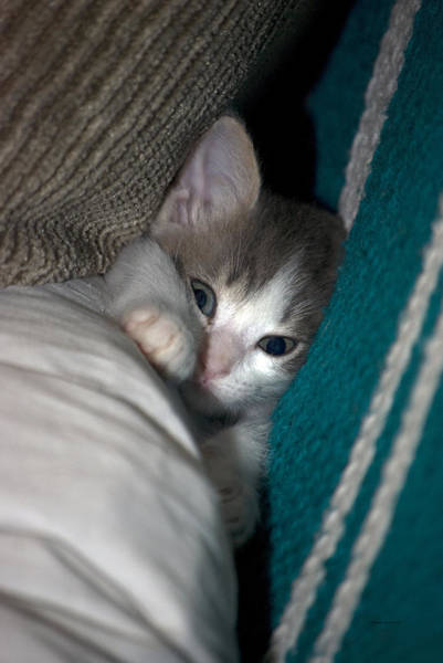 Wall Art - Photograph - Kitty In A Tight Spot by Thomas Woolworth